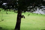 allanbank-squirrel1