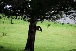 allanbank-squirrel1