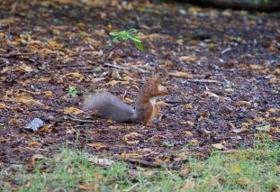 allanbank-squirrel2