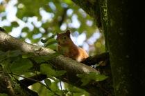 allanbank-squirrel3