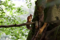 allanbank-squirrel4