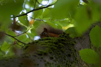 allanbank-squirrel5