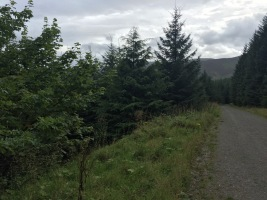 whinlatter-sycamore
