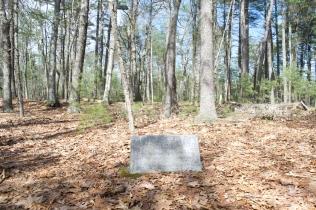 Thoreau bean field