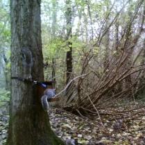 trailcam_06_squirrel_2