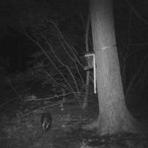 trailcam_08_badger_2