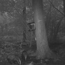 trailcam_09_badger_3